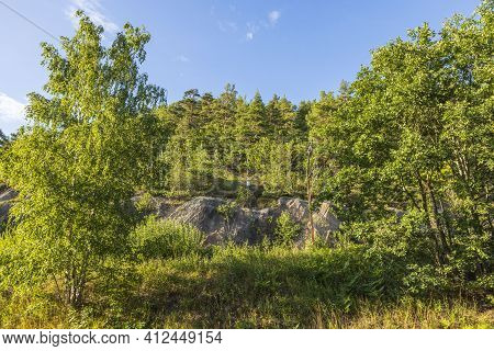 Gorgeous View Of Blue Sky Over Tops Of And Trees. Gorgeous Natural Backgrounds.