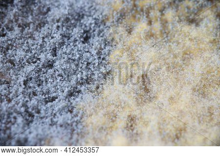 Mold And Mildew Fungi In Golden-black-white Color