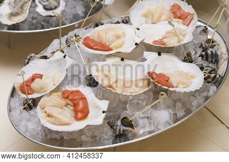 Sea Food And Mollusks In Seashells Served On Ice In Metal Bowl.