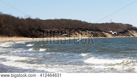 Seagulls Flying In The Wind Over The Long Island Sound Looking At The Bluffs Hills At Sunken Meadow