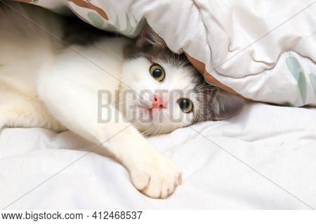 Scared And Surprised Cat Looking Up With Wide Open Eyes On White Background. The Domestic Cat Is Wra