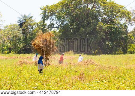 Panama Canta Gallo March13, Peasants At Work In The Fields. Shoot On March 13, 2021