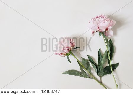 Feminine Styled Stock Photo With Pink Peony Flowers And Green Leaves Isolated On White Table Backgro