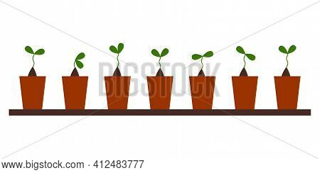 Seedlings. The Seeds Sprouted At Home. Green Sprout Leaves On The Soil. Plants Growing In The Ground