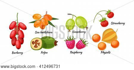 Forest Berry And Fruit Plant. Juicy Fresh Berries Physalis, Feijoa, Rosehip, Barberry, Goji, Black C
