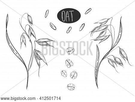 Hand Drawn Sketch Black And White Set Of Oat Plant, Grain, Oatmeal, Leaf, Flakes. Vector. Elements I