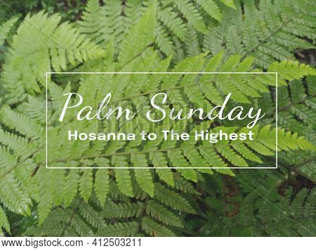 Palm Sunday. Hosanna To The Highest. Happy Palm Sunday Concept. On Blurry Background Of Green Fern L