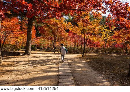 Gapyeong,south Korea-october 2020: Korean Kid Walking At The Road Surrounded By Red Autumn Foliage F