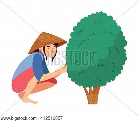 Vietnamese Woman Farmer In Straw Conical Hat Sitting And Picking Tea Leaves Vector Illustration