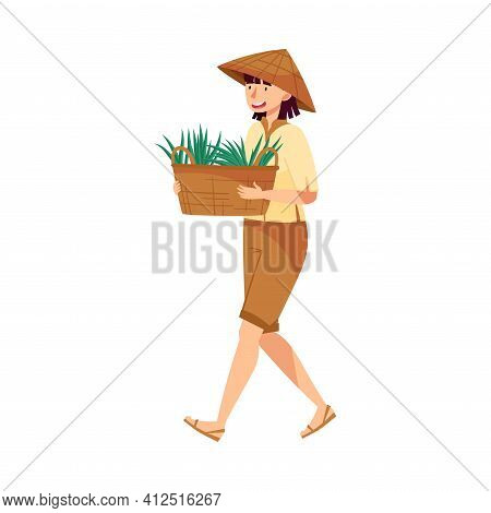 Vietnamese Woman Farmer In Straw Conical Hat Carrying Wicker Basket With Grass Blades As Rice Crop V