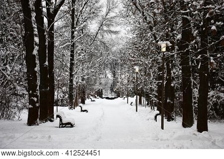 Winter Cloudy Day. A Botanical Garden In Minsk. The Avenue Of Ash-tree, Trees And The Earth, Are Cov