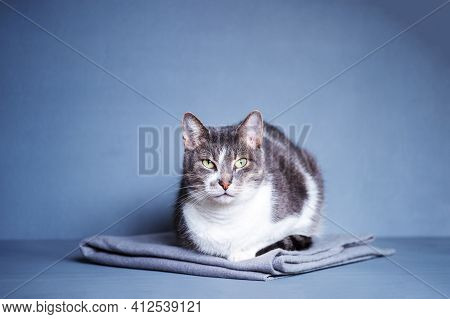 A Gray Cat With A White Breast And An Expressive Look Sits On A Gray Blanket On A Gray-blue Backgrou