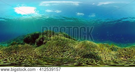 The Underwater World Of The With Colored Fish And A Coral Reef. Tropical Reef Marine. Philippines. V