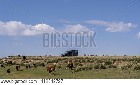 Ogii Lake, Mongolia - August 30, 2019: 4x4 Camper Van On The Steppe Of Mongolia With A Herd Of Goats