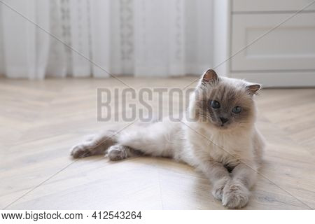 Beautiful Fluffy Cat Lying On Warm Floor In Room, Space For Text. Heating System