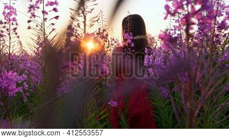 View Back Of Young Brunette Woman Walks Along Pink Field Among Florets Of Willow Tea, She Touch Flow