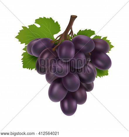 Black Grape. 3d Bunch Of Grapes, Realistic Fruit With Leaves. Isolated Winery Raw, Fresh Juicy Natur
