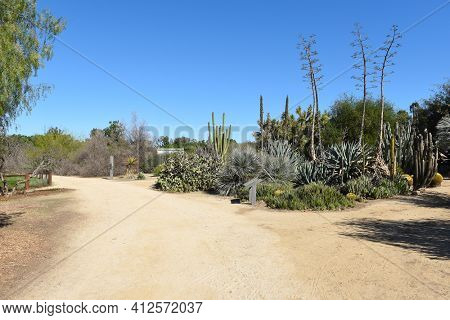 FULLERTON, CALIFORNIA - FEBRUARY 7, 2018: Fullerton Arboretum Desert Collection. The area features a large selection of cactus and succulents.