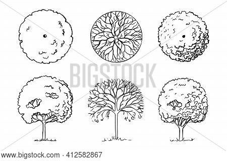Sketch Of Deciduous Trees Set Three Plants