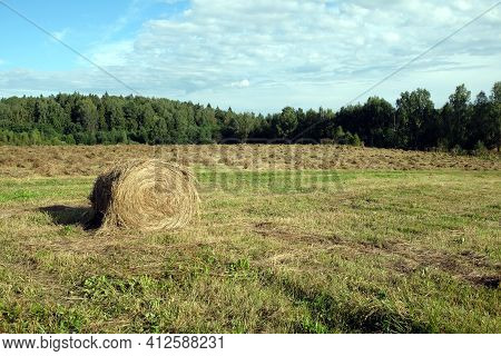 Rural Landscape With Summer Field With Many Rolled Haystack Close-up On Front And Mowed Field On The