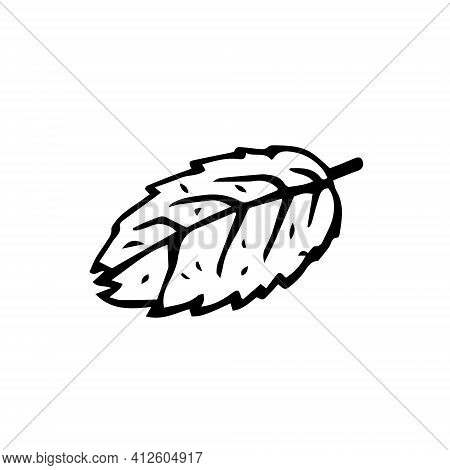 One Leaf From The Tree. Vector Image Of A Leaf With Streaks On A White Background.