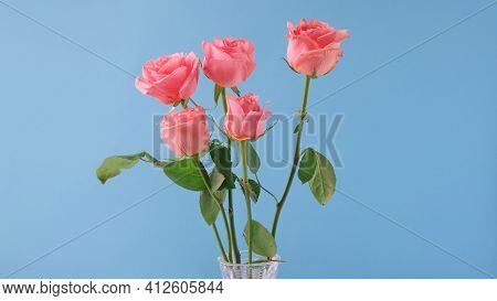 Bouquet Of Pink Roses On Blue Background. Birthday, Mothers, Valentines, Womens, Wedding Day Concept