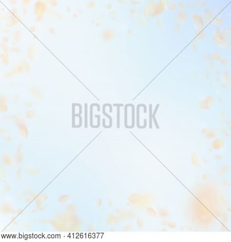 Yellow Orange Flower Petals Falling Down. Optimal