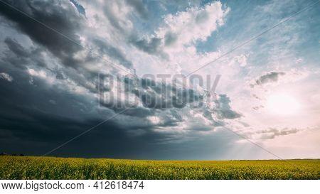 Agricultural Landscape With Flowering Blooming Rapeseed, Oilseed In Field Meadow In Spring Season. B
