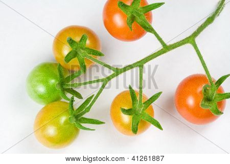 Various Stages of Ripening Cherry Tomatoes