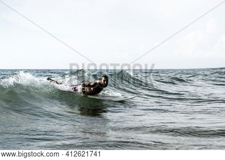Hipster Surfer Slipping On The Waves Lying On His Board With A Big Wave In Sea - Bearded Man Trainin