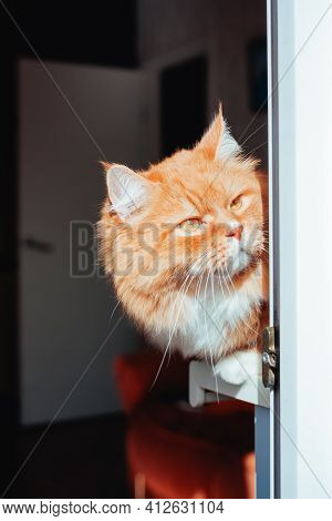 Red Cat Lying On The Windowsill Of The Balcony And Carefully Watches The Street. Ginger Cat In Brigh