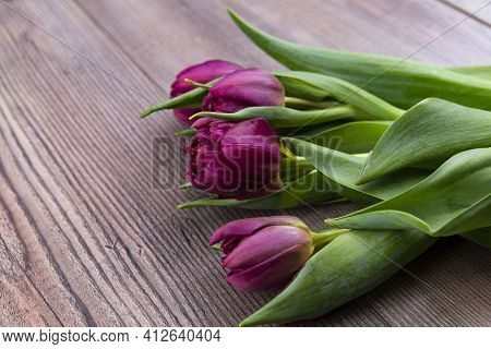 The Photo Shows A Purple Colored Tulips On A Wooden Table