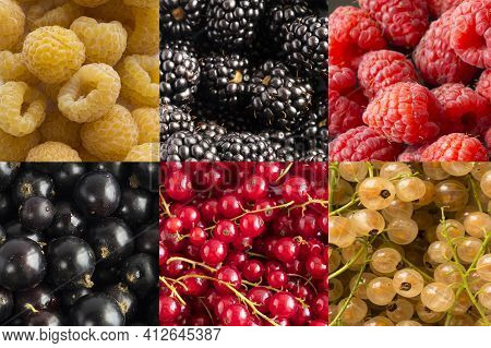 Fresh Blackberry And Currants Background. Background Of Blackcurrants, Yellow, Red Currants And Blac