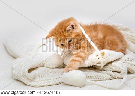 Small red british kitten playing with a white ball