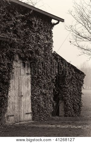 Old barn with wooden doors and ivy, Emilia Romagna, Italy