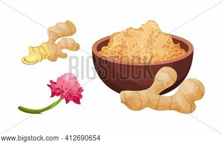 Fresh Ginger Rhizome As Fragrant Kitchen With Blooming Flower Vector Set