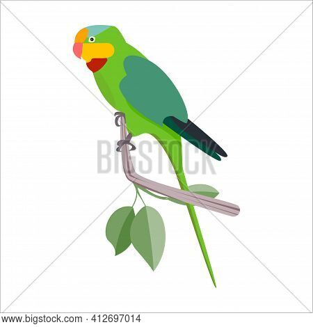 Green Bernard Parrot With A Long Tail Sits On A Branch With Leaves. Vector Cartoon Flat Illustration