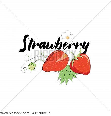 Vector Image Of Strawberries, Berry Halves, Sprouts, Strawberry Flower. Sticker With The Title Straw