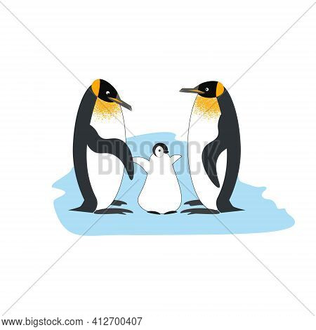 A Family Of Royal Penguins With A Baby Penguin On An Ice Floe. Vector Illustration Of Characters Iso