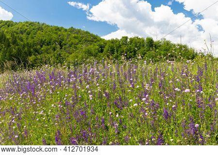 flowers meadow near Bohinj lake in Slovenia