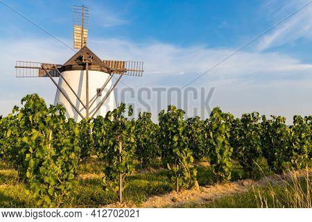 Vineyard near Windmill Retz, Lower Austria, Austria