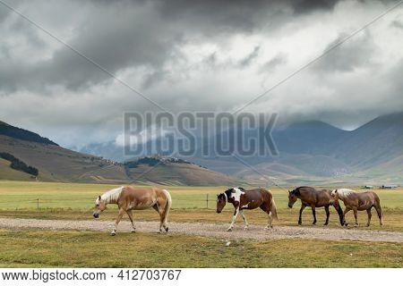 horses in mountain landscape near Castelluccio village in National Park Monte Sibillini, Umbria region, Italy