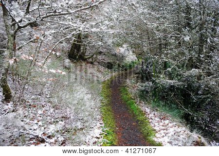 Footpath into the snowed forest