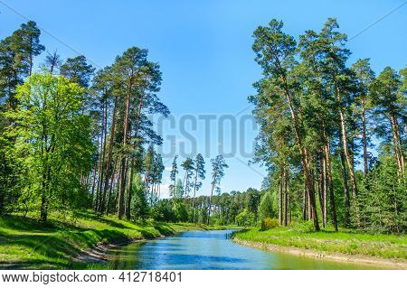 Pine Forest Growing On Both Sides Of River. Nature Almost Untouched By Human. Shot Near Kazan, Russi
