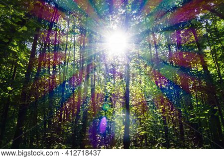 Sunlight, Breaking Through The Forest Foliage, Is Decomposed Into Rays And Plays With All The Color