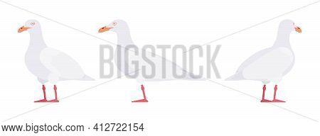 White Gulls, Seagulls Wildlife Seabirds And Marine Set. Wildlife Study, Ornithology And Birdwatching