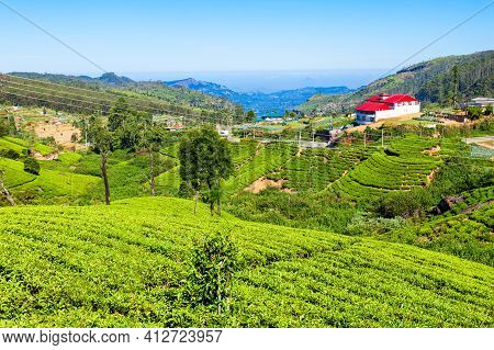Nuwara Eliya Tea Plantation In Sri Lanka. Nuwara Eliya Is The Most Important Place For Tea Plantatio