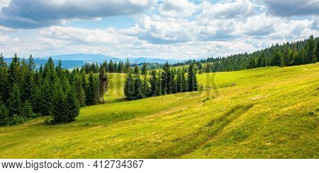 Coniferous Forests In Mountains. Summer Landscape With Green Grass On The Hills. Nature Scenery On A