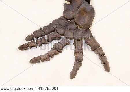 The Skeleton Of The Foreleg Of The Herbivorous Dinocephalus Ulemosaurus (latin: Ulemosaurus Svijagen