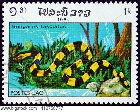 Laos - Circa 1984: A Stamp Printed In Laos Shows Banded Krait, Bungarus Fasciatus, Is A Species Of E